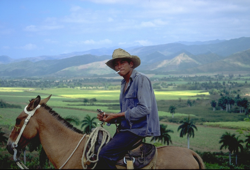 CUB0009 Cowboy and sugarcane fields 2000; copyright Christopher P Baker