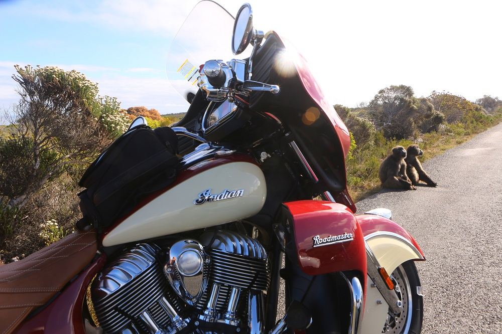 SX2A2811 1000px Baboons and 2015 Indian Roadmaster on the road to Cape of Good Hope, South Africa; copyright Christopher P Baker